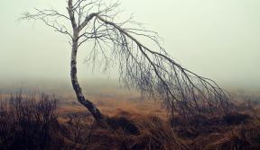 fog-1717410_1280