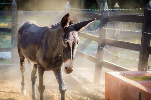 donkey-1521175_1280